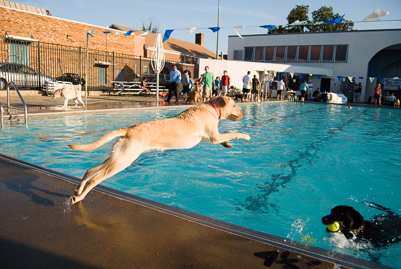 Doggie Day Swim Old Town Alexandria