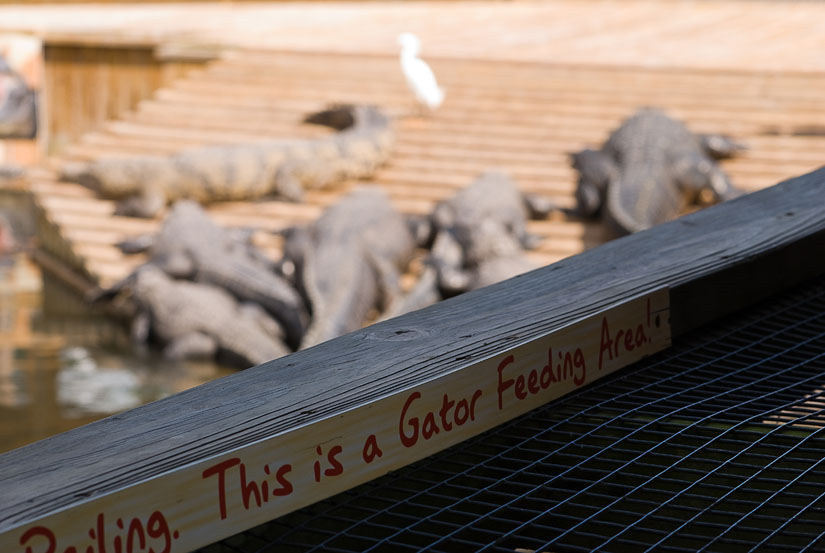 This is a gator feeding area!