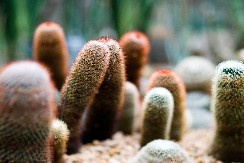 weird nubby plants at the conservatory - freelensing