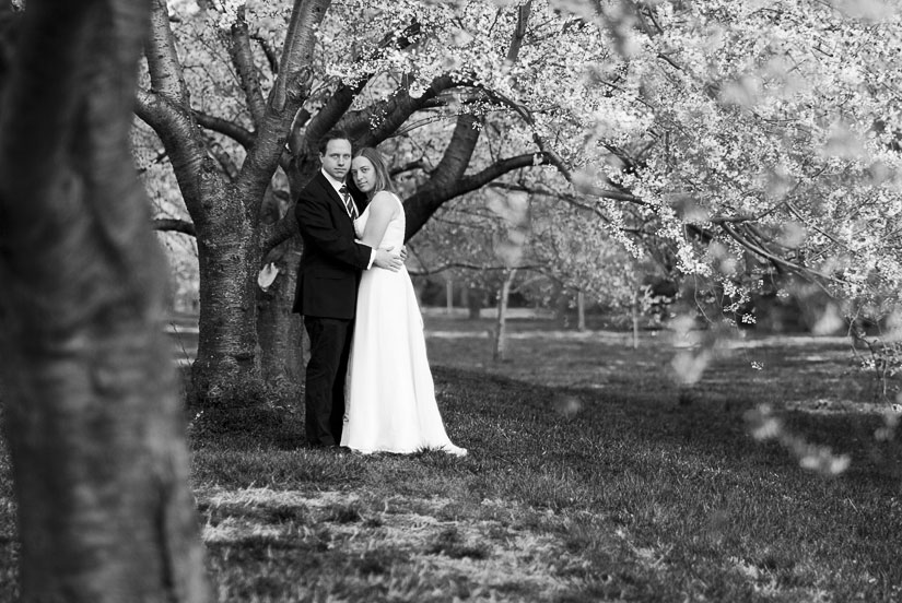 bride and groom under the cherry blossoms in washington, dc