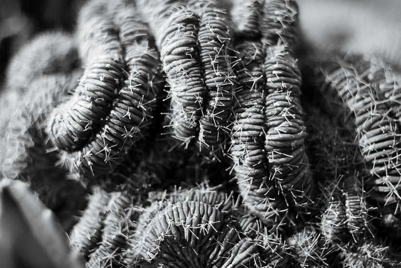 weird texture on a cactus
