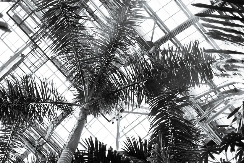 palm trees at the u.s. botanic garden