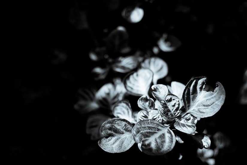 beautiful puddles of light on plants at u.s. botanic garden