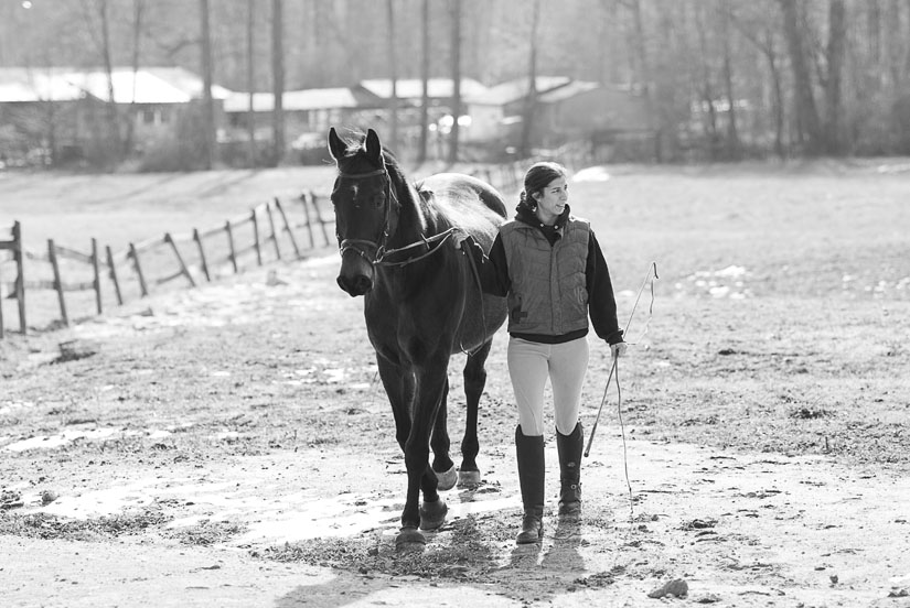 temptation horse farm portrait
