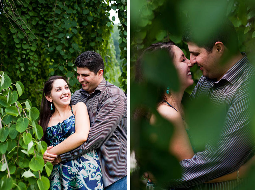 engaged couple in a tree at brookside gardens