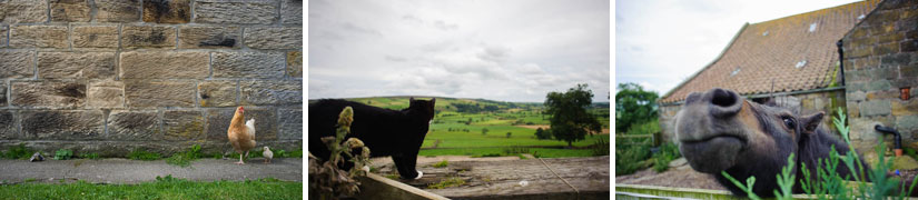 animals at danby castle in north yorkshire, england