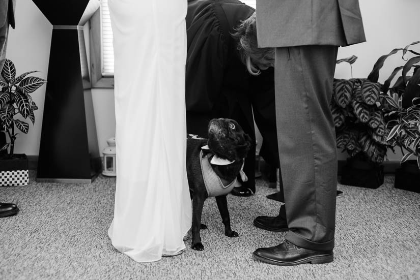 dog at a wedding ceremony in annapolis